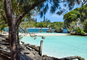 beautiful beach backed by pine trees on island in New Caledonia
