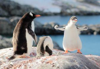 penguin on a boulder in antarctica