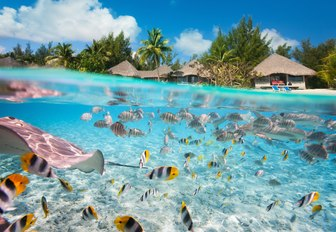 colourful fish and sting rays swim in the Tahiti waters