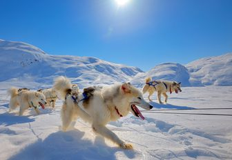 dog sledging on the snowy landscapes of Greenland
