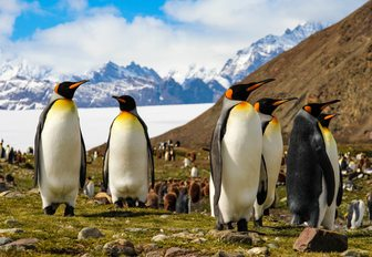 Penguins on the hills of the Arctic