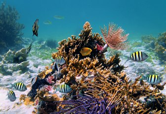 vibrant underwater world of colourful coral and fish in Costa Rica