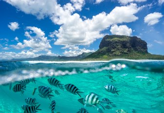 Fish swimming under water in the Seychelles with mountain in the background