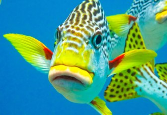 colourful fish in the waters of the Great Barrier Reef, Australia