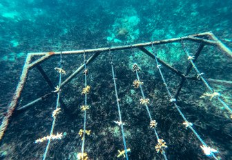 coral nurseries in seas surrounding thanda island