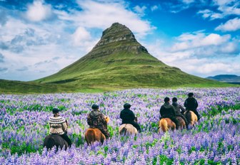 fields of lavender with horses and hill background