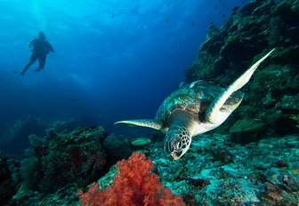 man swims scuba-diving behind sea turtle in gorgeous coral reef  in Antigua