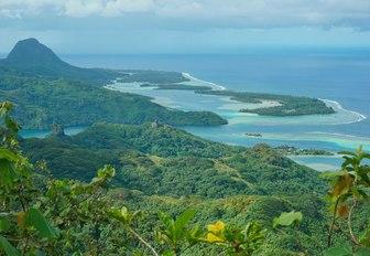 Greenery in Huahine, Tahiti