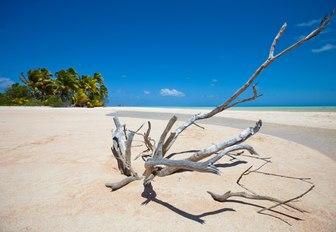 driftwood washed up on white sand beach of Paradise Island, New Caledonia