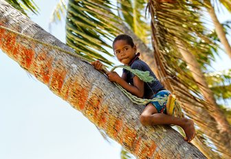 boy climbs tree on Lavena village on Teveuni island in Fiji