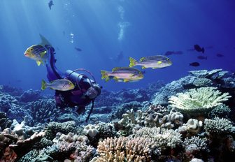 scuba diving amid the rich marine life in the Raja Ampat Islands, Indonesia