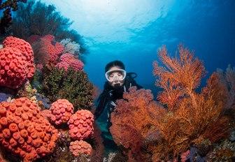 scuba diver discovers orange seafans in Raja Ampat, Indonesia