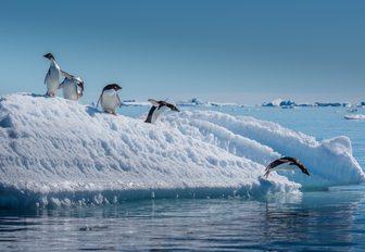 Yacht charter in Antarctica