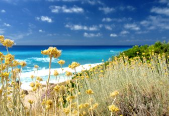 white sandy beach backed by wild flowers along the South of France