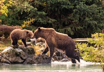 alasak is full of wildlife you will discover while on a luxury yacht vacation to this natural Wonder like whales, mosse, and bears