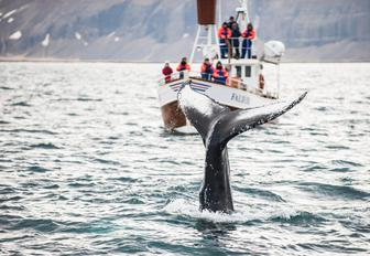 tourists watching whales emerge from the waters of new england, sadly they don't have the privacy of a luxury charter yacht to witness this natural beauty