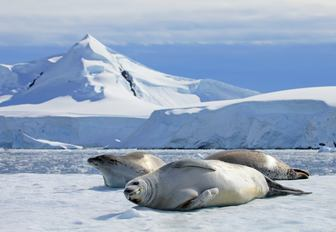 Antarctica: A superyacht vacation of a lifetime photo 12