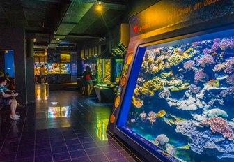 aquarium at oceanographic museum of monaco