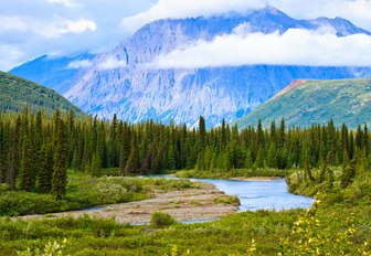 beautiful landscape of Alaska with forest and mountains