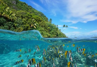 Over and under the sea near the shore of a lush wild coast with a school of tropical fish underwater split by waterline, Huahine island, French Polynesia