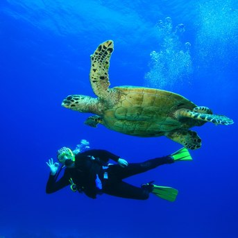 Scuba diver swimming with sea turtle in Caribbean