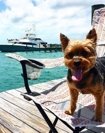 Little Dog Near Charter Yacht