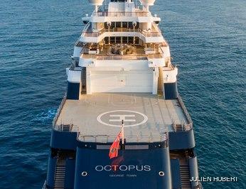 Octopus photo 51