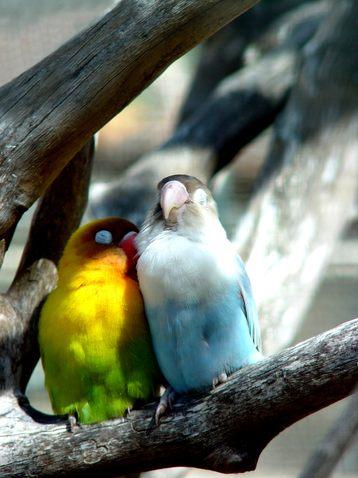 Fallen in love and cuddling birds
