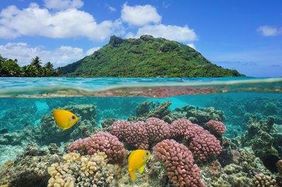 Arrive in Tahiti