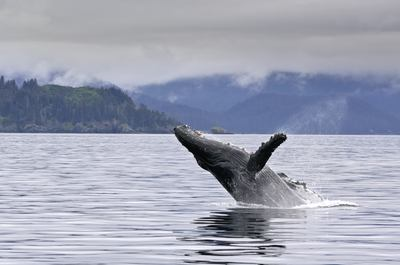 Enjoy whale-watching from your yacht