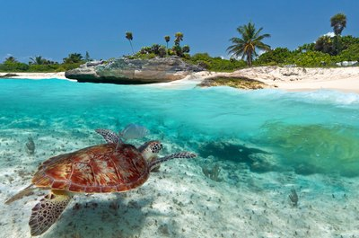 Adventure into the deep blue sea in Green Turtle Cay