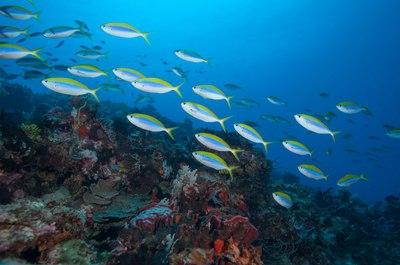 Zanzibar to Pemba Island