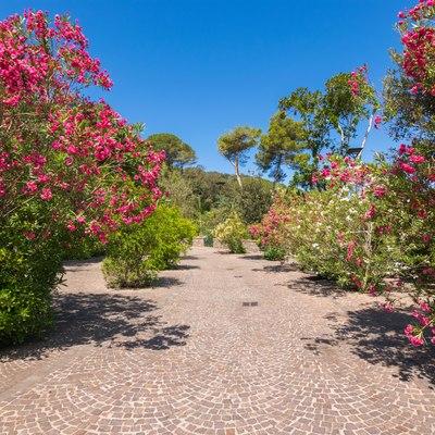 Flourish in the healing locale of Ischia