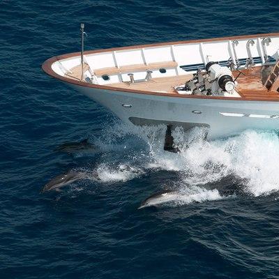 Shake N Bake TBD Yacht Running Shot - Bow
