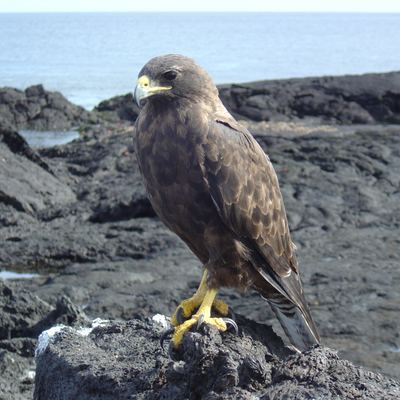 Santa Cruz to Isabela Island