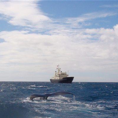 Bleu De Nimes Yacht Whale