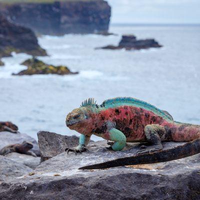 Isla Darwin to Santa Cruz Island