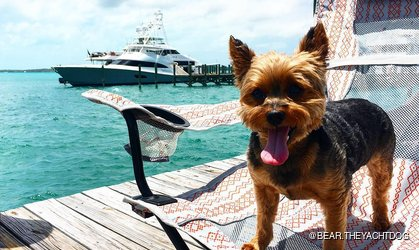 Little Dog Near Charter Yacht