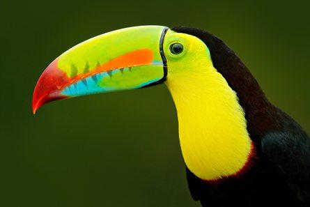 Costa Rica photo 19