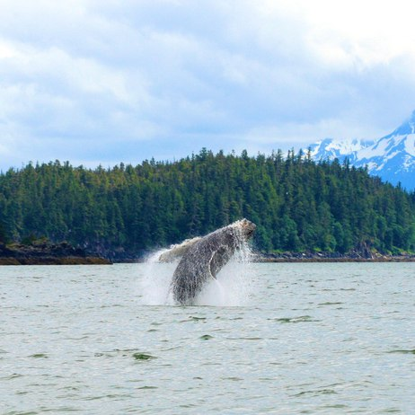 7 days of Social Distancing on a Yacht Charter in Alaska