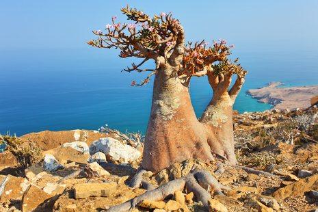Socotra photo 17