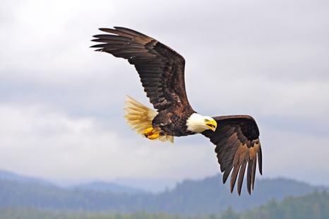 British Columbia photo 16
