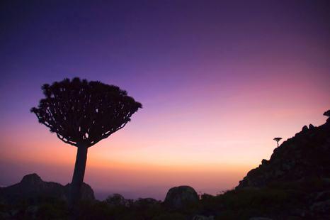 Socotra photo 28