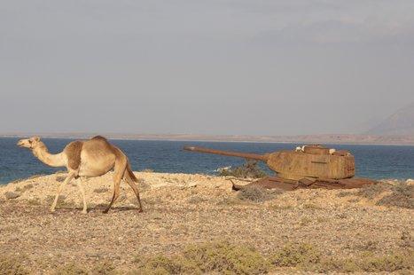 Socotra photo 21