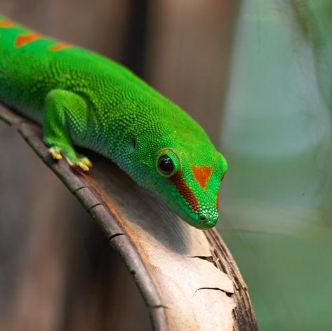 Gecko sitting on stalk