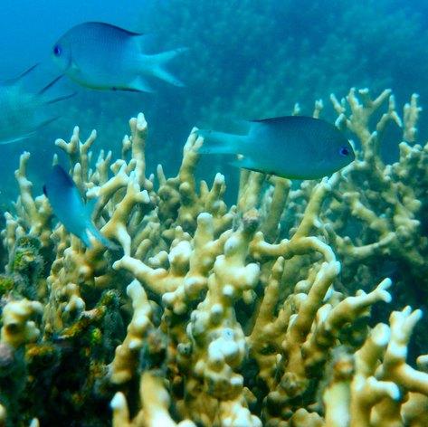 Whitsundays photo 8