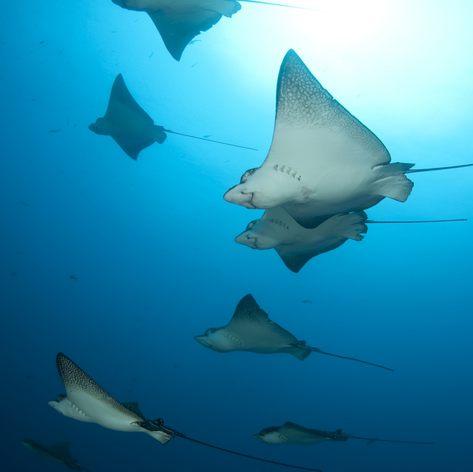 Galapagos Islands photo 15