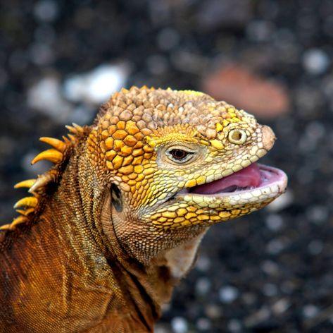 Galapagos Islands photo 27