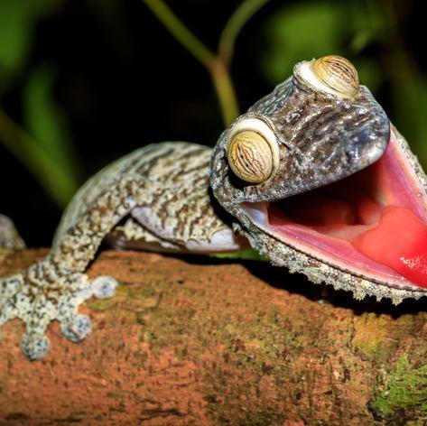 Madagascar photo 44