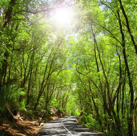 Marvel at the Beauty of Mahe Forest